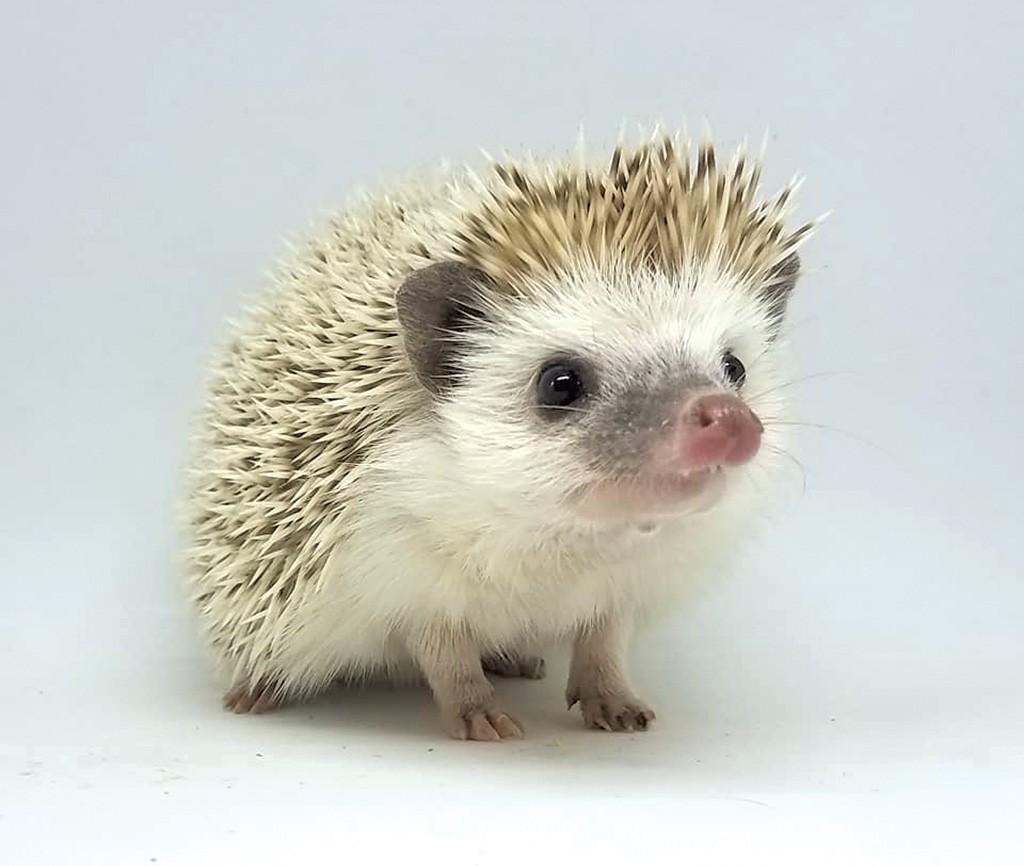 hedgehog1.jpg