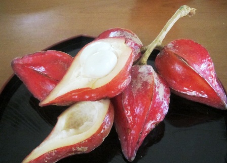 Belembing-darah-CUT-fruitS.jpg