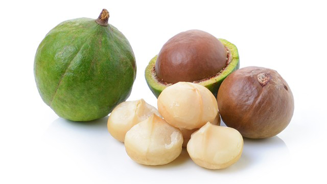 macadamia1.jpg