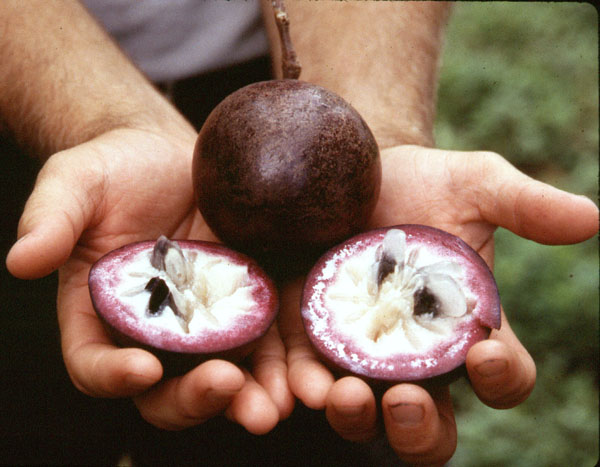 purple_star_apple1.jpg
