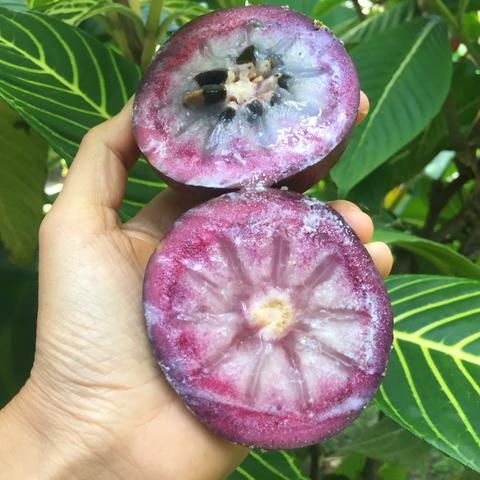 purple_star_apple3.jpg