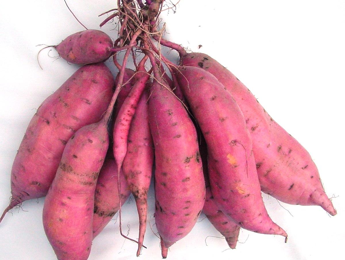 Sweetpotato3.jpg