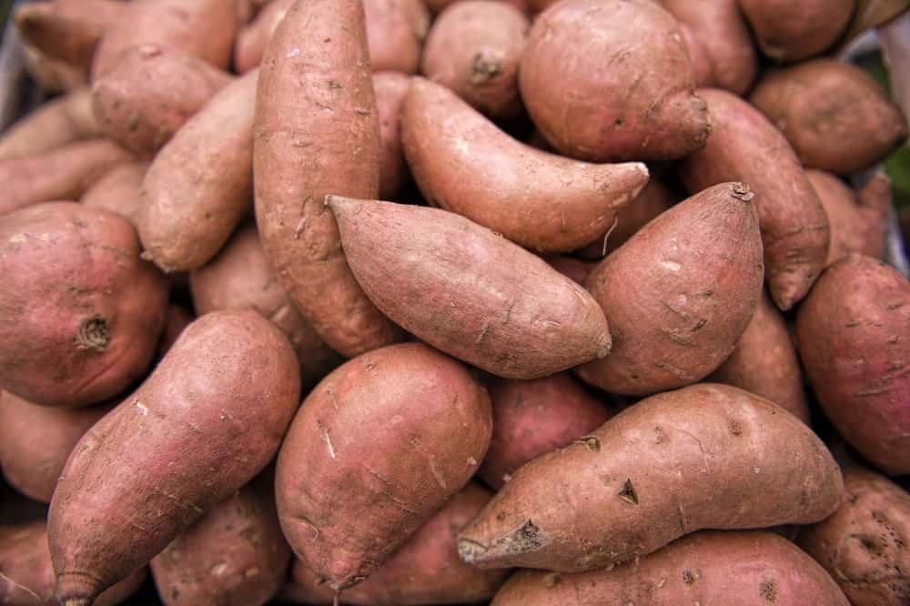 beauregard-sweet-potatoes.jpg