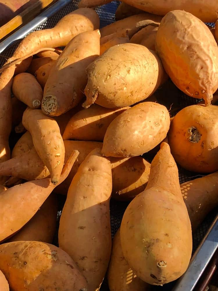 carolina-bunch-sweet-potatoes.jpg